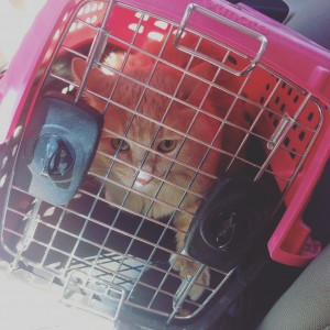 My cat on the way to get his nails did!